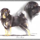 Tibetan Mastiff dog canvas art print
