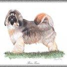 Tibetan Terrier dog canvas art print