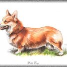 Welsh Corgi dog canvas art print