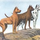 Great Danes dog canvas art print by Louis Agassiz Fuertes
