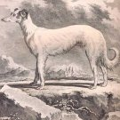 Greyhound dog art print I by Georges-Louis Leclerc Comte de Buffon