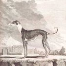 Greyhound dog art print III by Georges-Louis Leclerc Comte de Buffon