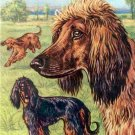 Afghan Hounds or Persian Greyhounds dog canvas art print by K. Hund