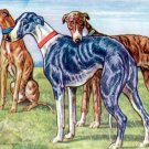 Greyhounds dog canvas art print by Kamerad Hund