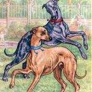 Italian Greyhounds dog canvas art print by Kamerad Hund