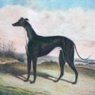 English School Master McGrath greyhound dog canvas art print