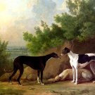 Three Greyhounds dog canvas art print by Sawrey Gilpin
