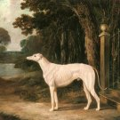 White Greyhound 1839 dog canvas art print by John Frederick Herring Sr