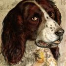 Head of a Dog canvas art print by Hendrick Goltzius