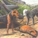 Airedale & Bedlington Terrier dog canvas art print by Agassiz Fuertes