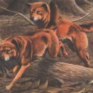 Australian Dingos Dingo dog canvas art print by Louis Agassiz Fuertes