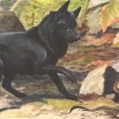 Belgian Shipperke dog canvas art print by Louis Agassiz Fuertes