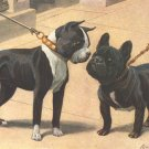 Boston Terrier & French Bulldog dog canvas art print by Louis Agassiz Fuertes