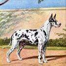 Black Dappled Harleguin Great Dane dog canvas art print by Edwin Megargee