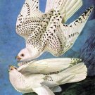 Gyrfalcon 1836 bird canvas art print by John James Audubon