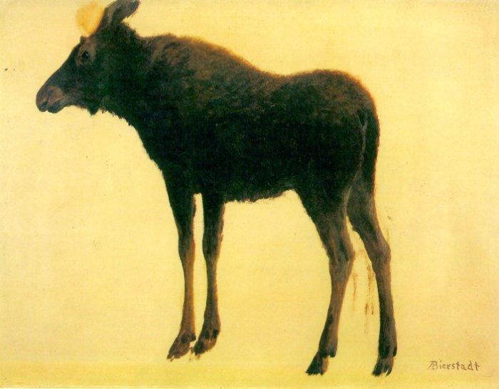 Elk or wapiti largest species of deer American wild animal canvas art print by Albert Bierstadt