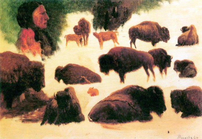 Study of Buffaloes wild animal canvas art print by Bierstadt