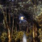 View Chickahominy Swamp Civil War Scenery canvas art print McIlvaine