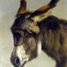 Head of a Donkey horse family animal canvas art print by Rosa Bonheur