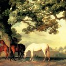 Mares and Foals Beneath Large Trees horses canvas art print by Stubbs