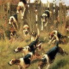Foxhounds at Full Cry dog canvas art print by Thomas Blinks