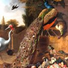 Peacocks 1683 bird canvas art print by Melchior d'Hondecoeter