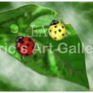Lady Birds on a leaf