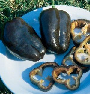 Organic Heirloom Sweet Chocolate Bell Pepper 20+ Seeds