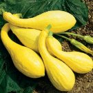 Organic Heirloom Yellow Crookneck Squash 25 Seeds