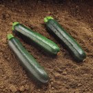 )rganic Black Beauty Zucchini 25 Seeds Free Shipping!