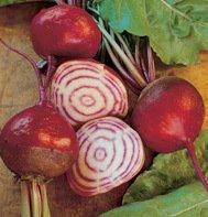 Organic Heirloom Chioggia Beet 50 Seeds Free Shipping
