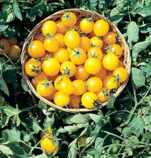 30 RARE Organic Gold Nugget Cherry Tomato Seeds