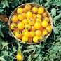 30 RARE Organic Gold Nugget Cherry Tomato Seeds