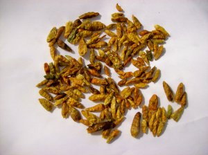 Peri-Peri or Pili-Pili Hot Pepper 10 Seeds