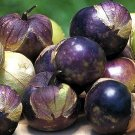 Rare Purple Tomatillo 50 seeds $3.99 Free Ship