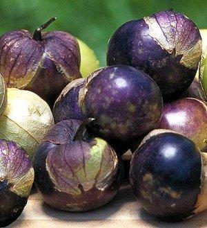 Rare Purple Tomatillo 50 seeds $3.99 Free Ship