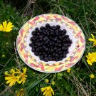 Highbush Blueberry 75 Seeds Organic $4.29