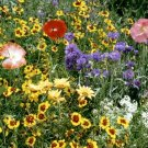 Drought Resistant Wildflower Seed Mix 1,000+ Seeds