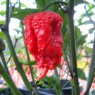 Carolina Reaper Pepper Seeds