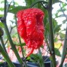 Carolina Reaper Pepper Seeds