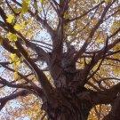 """8"""" x 10"""" Mighty Tree Photo - Item# MP810-KC4"""