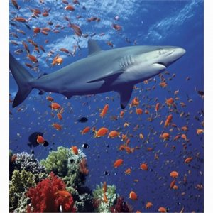 Underwater ocean shark scene bathroom shower curtain ct for How do sharks use the bathroom