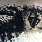 Cheetah San Diego Zoo 1993 holo foil chase card H-3