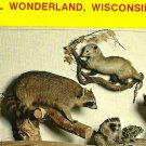 Animal Wonderland MAMMALS Wisconsin Dells postcard