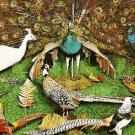 Animal Wonderland PHEASANTS PEACOCKS Wisconsin Dells Postcard