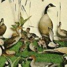 Animal Wonderland DUCKS GEESE GOOSE Wisconsin Dells Postcard