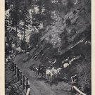 Vintage Postcard High Drive Cheyenne Canon Colorado Horse & Buggy 1909