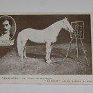"Vintage Postcard Mascotte ""Adding Horse"" H.S Maguire Trainer"