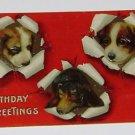 "Vintage Postcard ""Birthday Greetings"" Three Dogs"