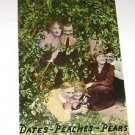 Vintage Postcard Dates Peaches Pears Three couples by tree PM'd 1912